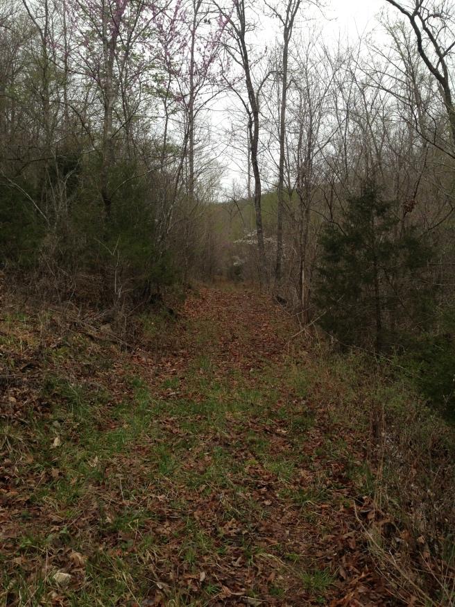 Old logging road 0563