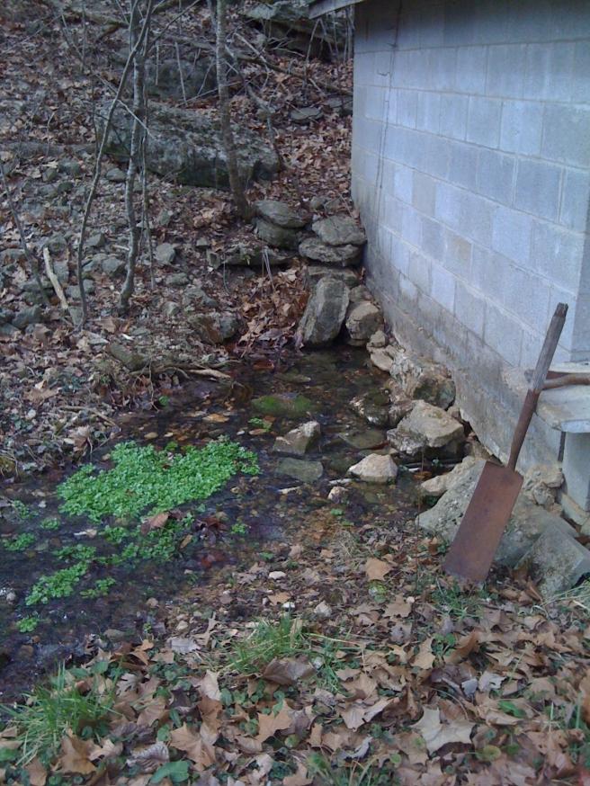Watercrest in springwater 0456